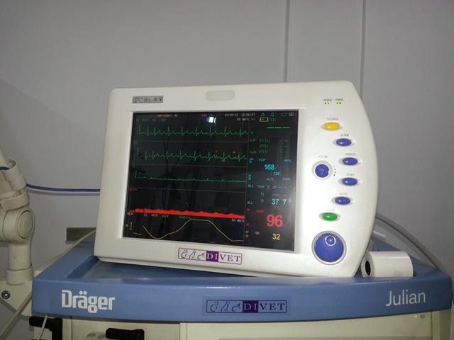 Chirurgie-Di-Vet4