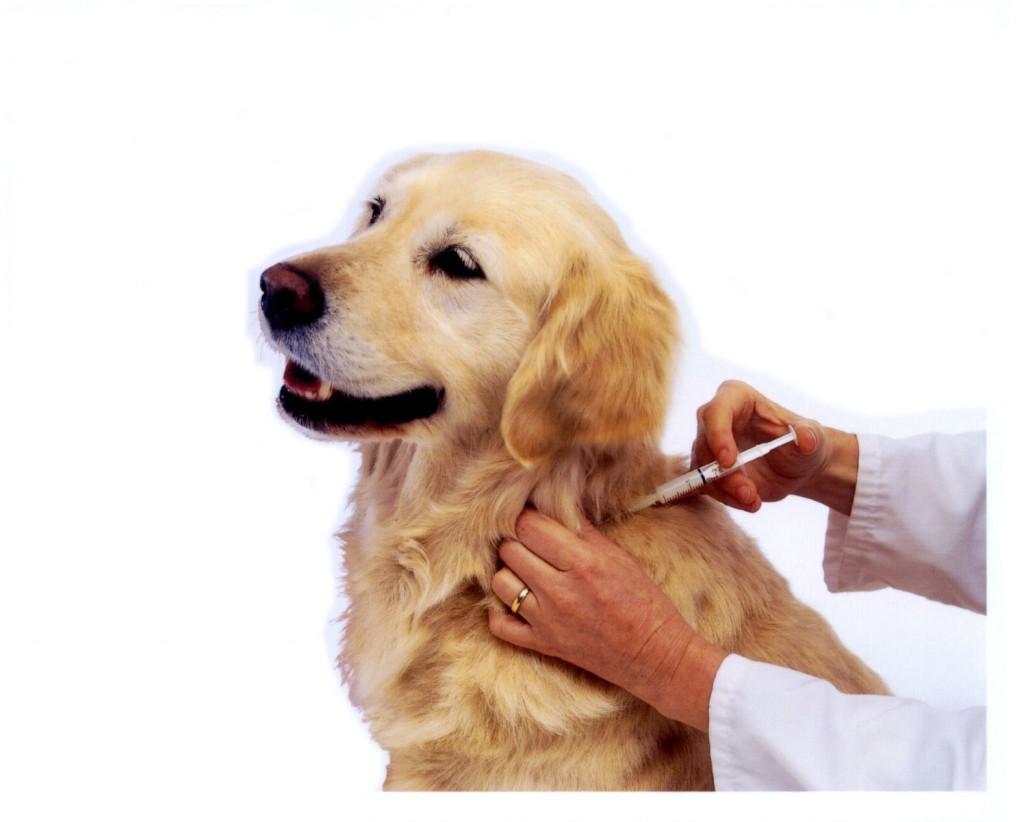 vaccin2-1024x822